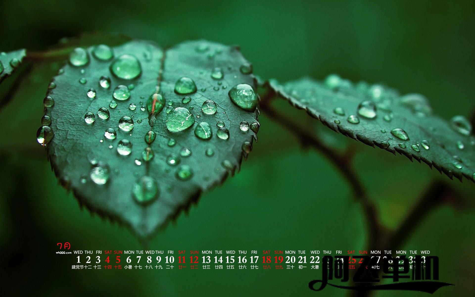 20207月绿色植物特写高清日历壁纸